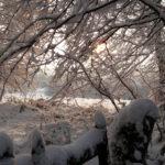 Bocage sous la neige