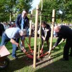Plantation d'un arbre par le Maire de Valognes
