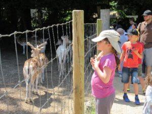 Enfants au par zoologique devant des faons.