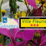 Valognes - Label Ville Fleurie 3 fleurs