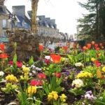 Tulipes rue de l'église